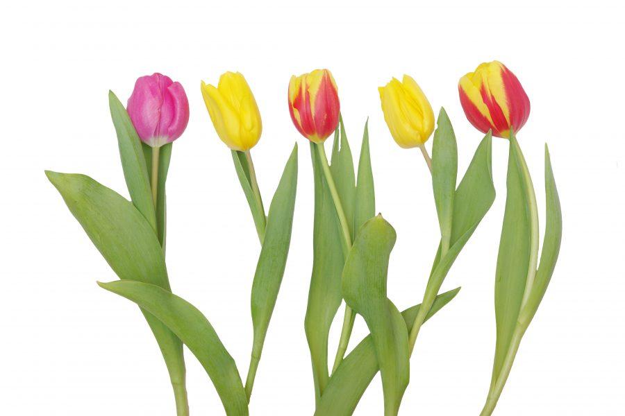 Kuidas ma sõbrapäeval lilledest ilmajäin